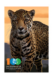 Jacksonville Zoo and Gardens - 100th - Jaguar Posters by  Lantern Press