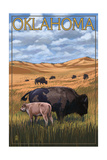 Oklahoma - Buffalo and Calf Prints by  Lantern Press