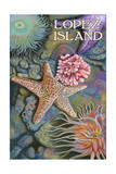 Lopez Island, Washington - Tidepool Poster by  Lantern Press