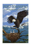 Port Townsend, Washington - Bald Eagle and Chicks 高品質プリント : ランターン・プレス