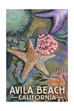 Avila Beach, California - Tidepool Posters by  Lantern Press