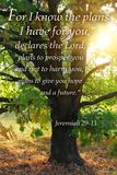 Lantern Press - Jeremiah 29:11 - Inspirational Obrazy