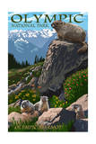 Olympic National Park - Marmots Prints by  Lantern Press