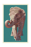 Asian Elephant Prints by  Lantern Press
