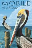 Brown Pelican - Mobile, Alabama Affiches par  Lantern Press