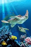Sea Turtle Swimming Kunst af Lantern Press