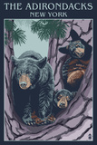 The Adirondacks, New York State - Bear Family in Tree Posters by  Lantern Press
