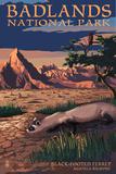 Badlands National Park, South Dakota - Ferret at Night Art