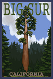 Big Sur, California - Redwood Tree Prints by  Lantern Press