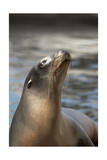 Harbor Seal Prints