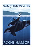 Roche Harbor - San Juan Island, Washington - Orca and Calf Art by  Lantern Press