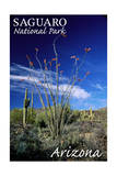 Saguaro National Park, Arizona - Cactus and Plants Poster by  Lantern Press
