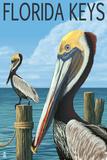 Florida Keys, Florida - Brown Pelican Affiches par  Lantern Press