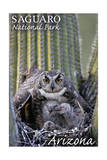 Saguaro National Park, Arizona - Owl and Babies Prints by  Lantern Press