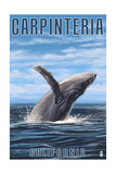 Carpinteria, California - Humpback Whale Prints by  Lantern Press