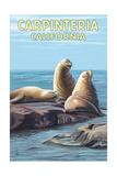 Carpinteria, California - Sea Lions Plakaty autor Lantern Press