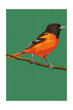 Oriole and Branch Posters by  Lantern Press