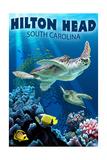 Hilton Head, South Carolina - Sea Turtles Posters van  Lantern Press