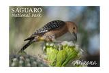 Saguaro National Park, Arizona - Woodpecker Posters par  Lantern Press