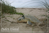 Padre Island National Seashore - Kemp's Ridley Sea Turtle Hatching Print van  Lantern Press