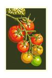 Tomatoes Prints by  Lantern Press