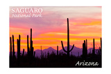 Saguaro National Park, Arizona - Orange and Pink Sunset Prints by  Lantern Press