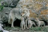 Monmouth, Oregon - Wolf and Pups Plakat av  Lantern Press