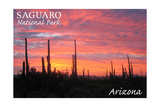 Saguaro National Park, Arizona - Pink Sunset Art by  Lantern Press