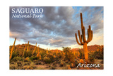 Saguaro National Park, Arizona - Day Scene Poster by  Lantern Press
