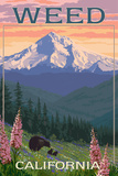Weed, California - Bear and Spring Flowers Art by  Lantern Press