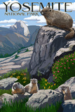Yosemite National Park, California - Marmots Poster by  Lantern Press