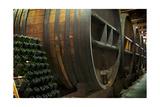 Wine Barrels Posters