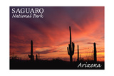 Saguaro National Park, Arizona - Storm and Sunset Posters by  Lantern Press
