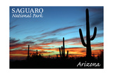 Saguaro National Park, Arizona - Cactus Silhouettes Prints by  Lantern Press