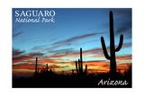 Saguaro National Park, Arizona - Cactus Silhouettes Prints