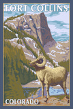Fort Collins, Colorado - Big Horn Sheep Posters by  Lantern Press