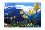 Glacier National Park, Montana - Beargrass in Bloom Posters by  Lantern Press