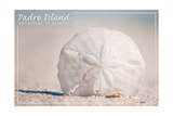 Padre Island National Seashore - Sand Dollar Prints by  Lantern Press