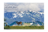 Olympic National Park - Deer and Hurricane Ridge Posters by  Lantern Press