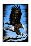 Bald Eagle - Scratchboard Art by  Lantern Press