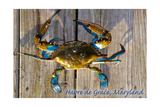 Harve De Grace, Maryland - Blue Crab on Dock Posters by  Lantern Press