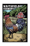 Waitsfield, Vermont - Rooster - Scratchboard Prints by  Lantern Press