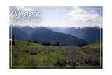 Olympic National Park - Hurricane Ridge and Flowers Prints by  Lantern Press