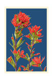 Indian Paintbrush Art by  Lantern Press