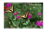Montana - Butterfly and Flowers Poster