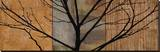 Arboreal I Stretched Canvas Print by Chris Donovan