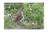 Oregon Coast - Sandpiper Print