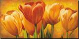 Bouquet of Orange Tulips Stretched Canvas Print by David Pedersen