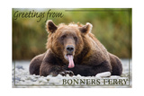 Bonners Ferry, Idaho - Grizzly Bear with Tongue Out Prints by  Lantern Press