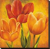 Orange Tulips I Stretched Canvas Print by David Pedersen